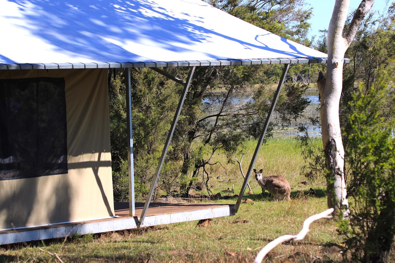 wallaroo by tent kinrara reduced