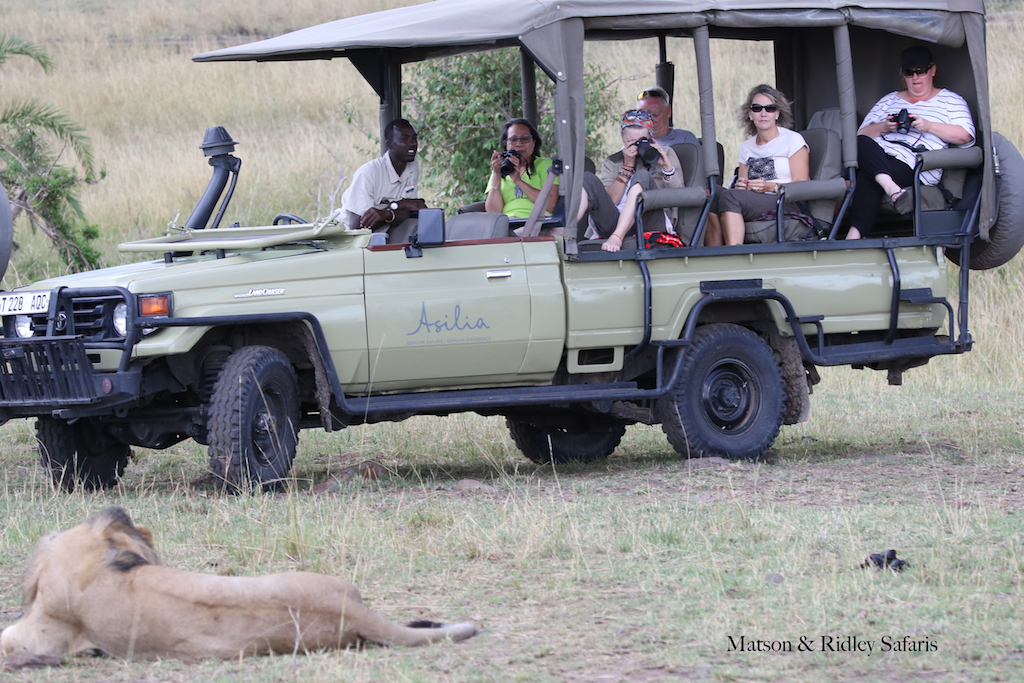 lion next to car with group reduced for blog