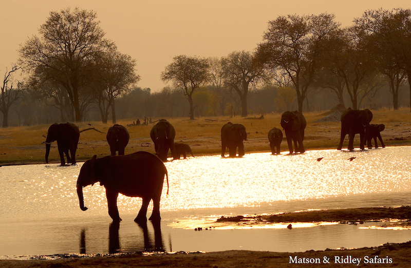 resized Hwange waterhole eles sunset