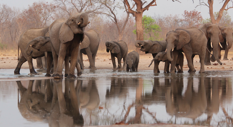 resized reflections of giants Hwange
